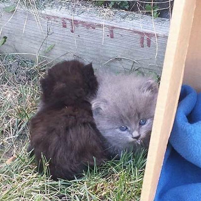 chatons abandonnés buisson