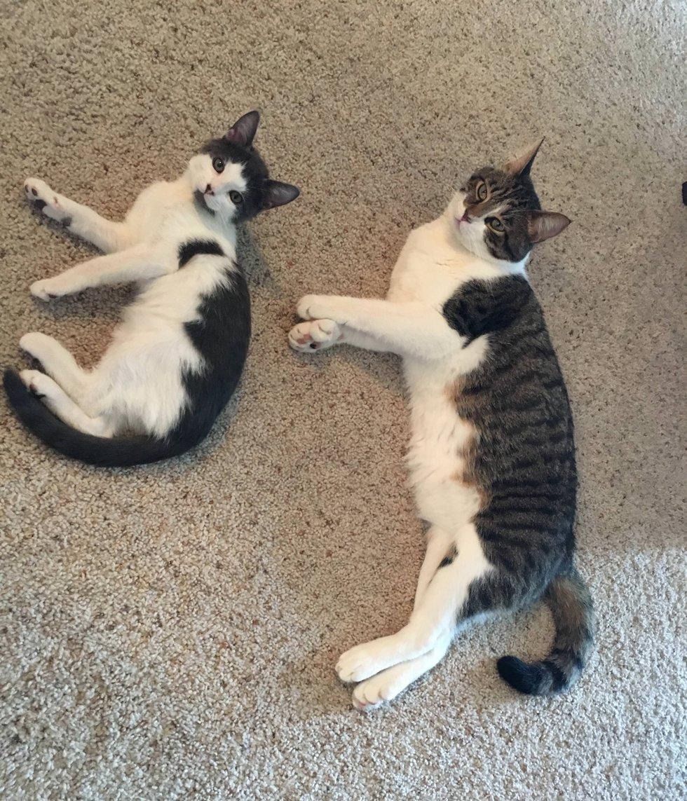 chaton chat couchés