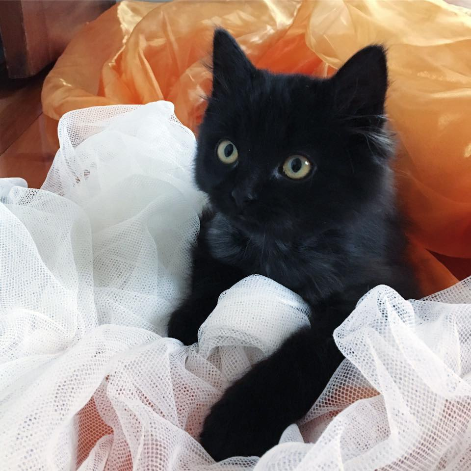 chaton halloween noir