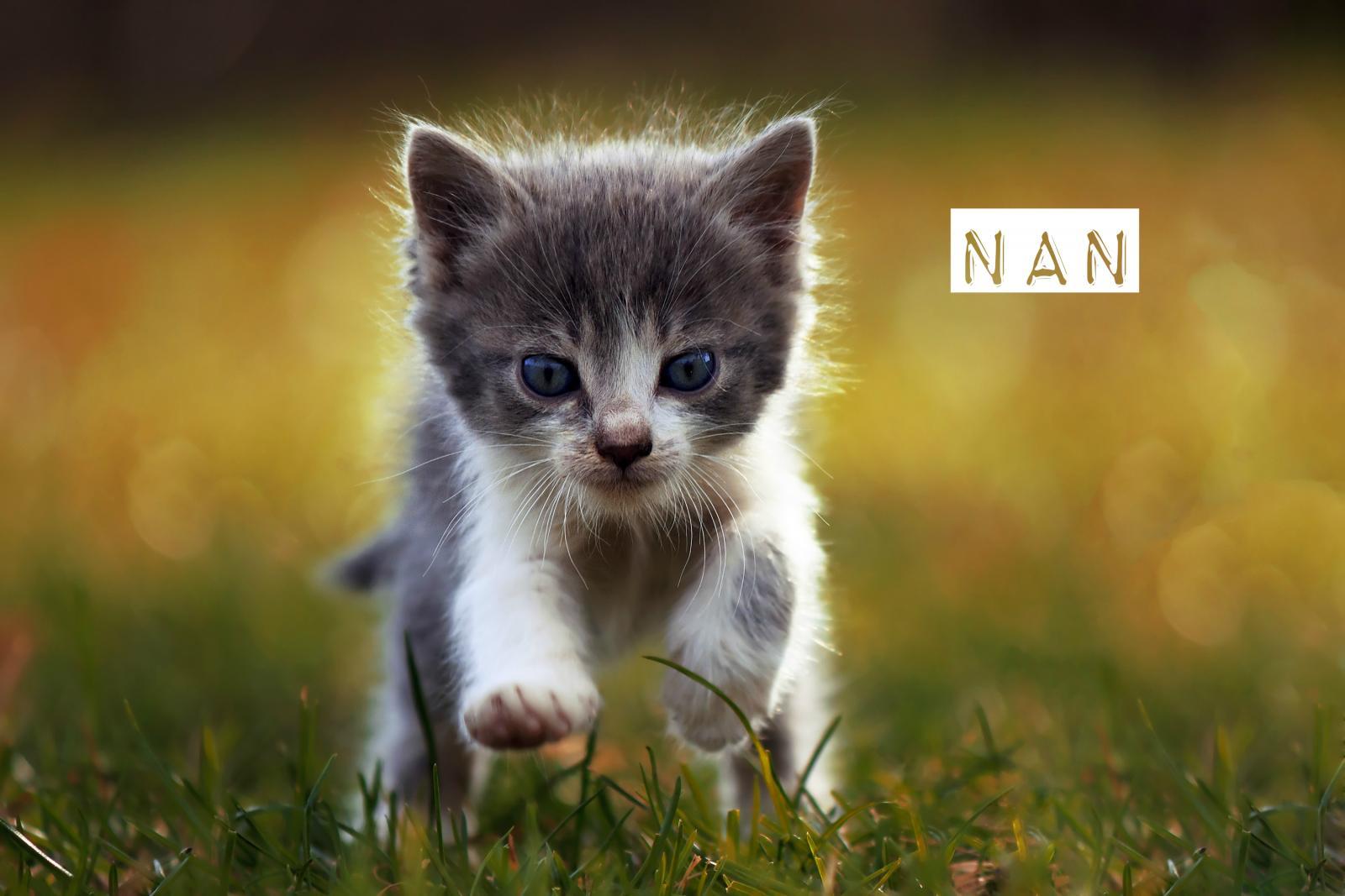 idées prénoms chats