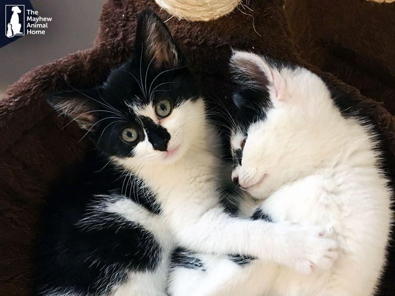 ils sauvent des chatons retrouv s dans une machine laver. Black Bedroom Furniture Sets. Home Design Ideas