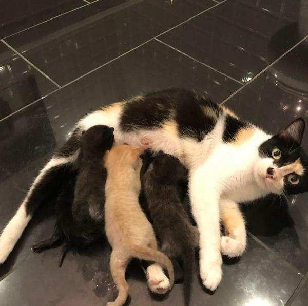 portée chatons maman chat