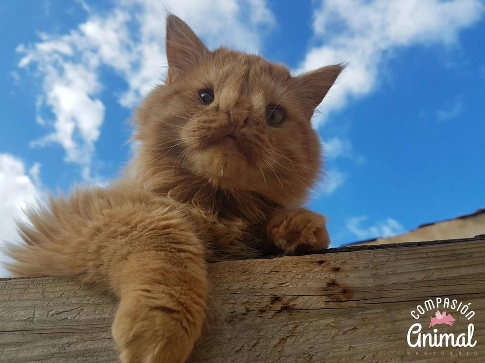 chat roux jardin