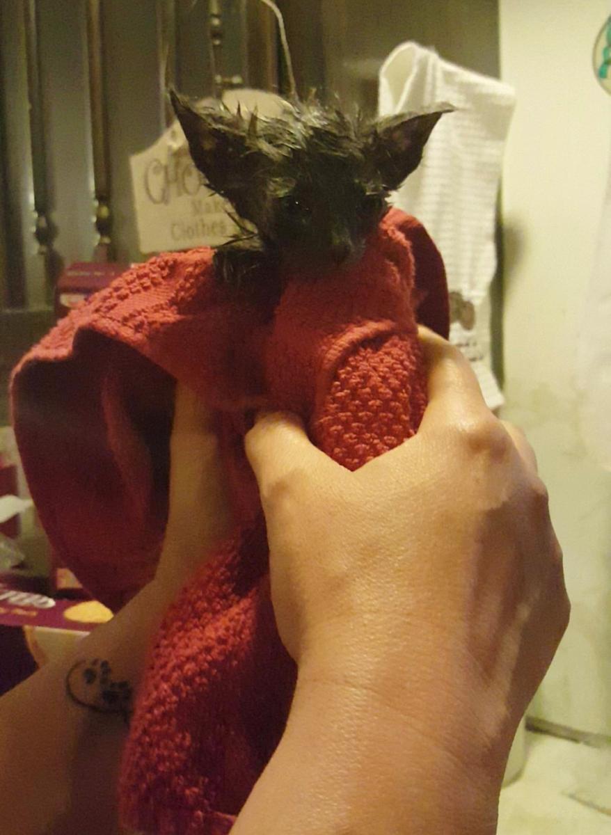 chaton bain