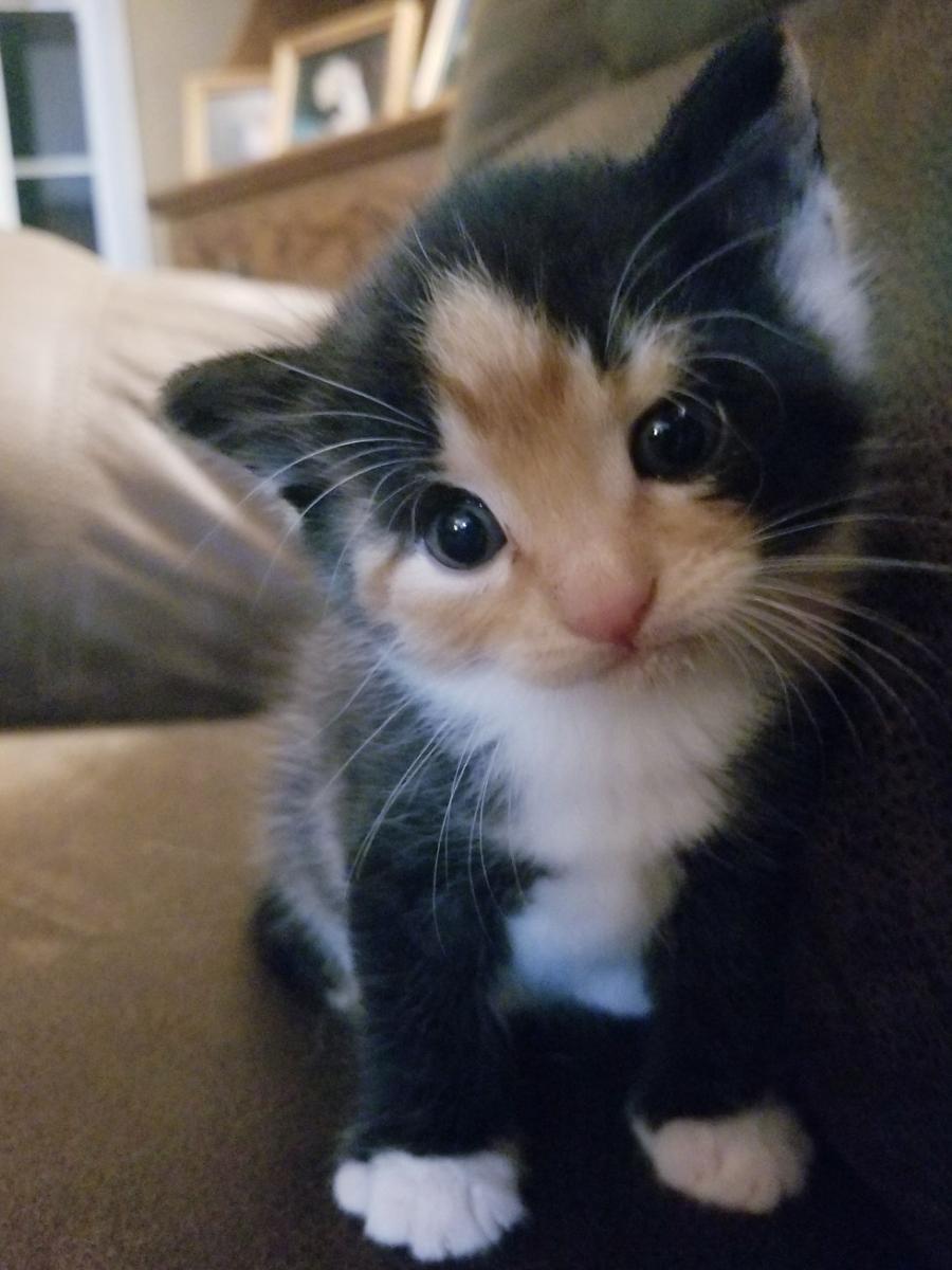 chat prématuré