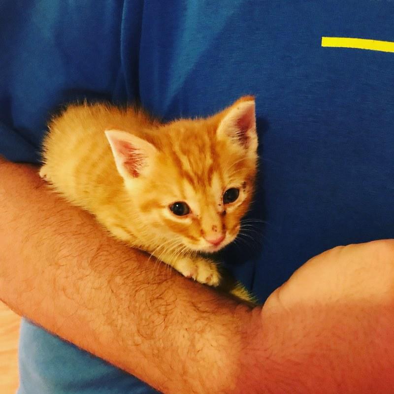 chaton roux bras