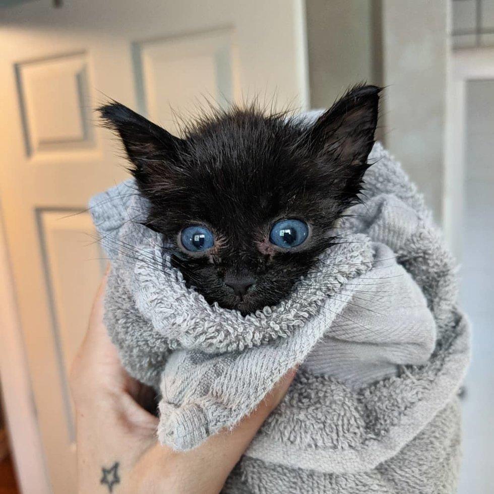 chaton serviette