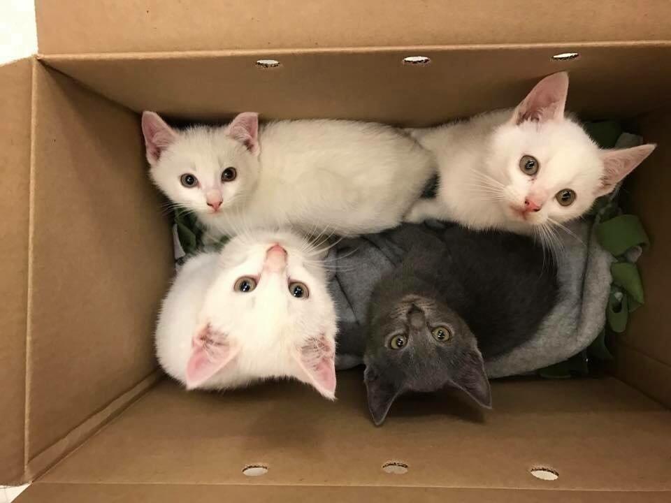 chatons carton