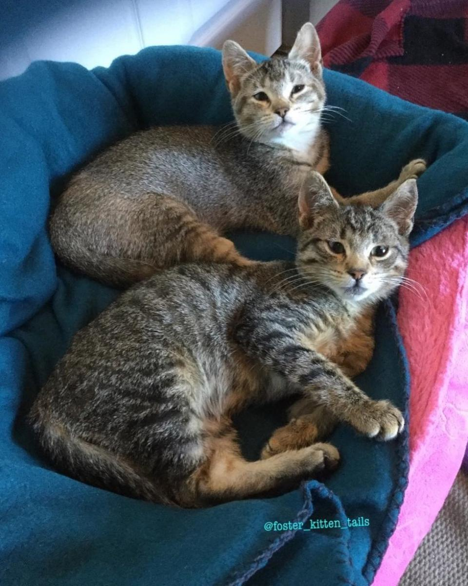 chatons grands