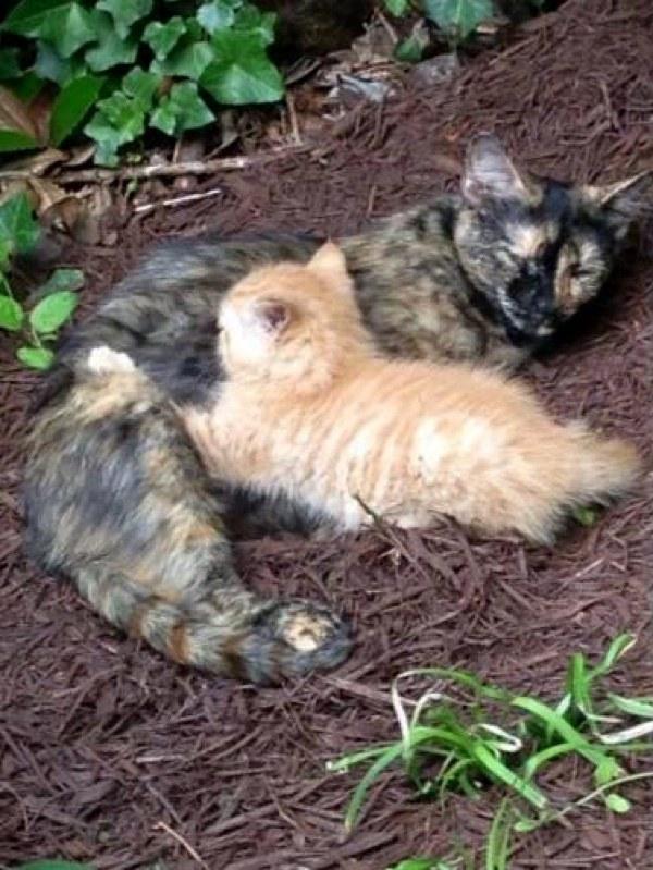 chatte et chaton