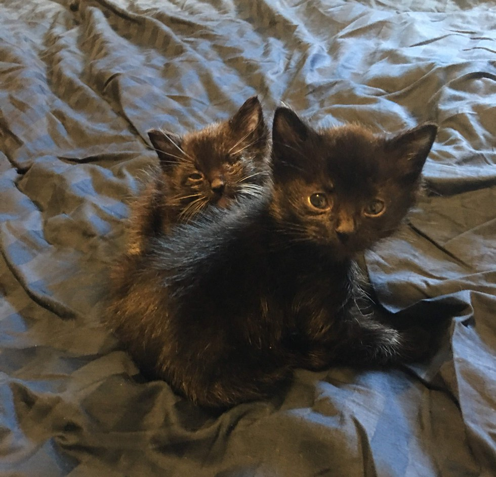 chatons noirs