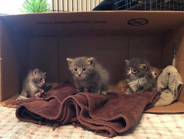 chaton abandonnés