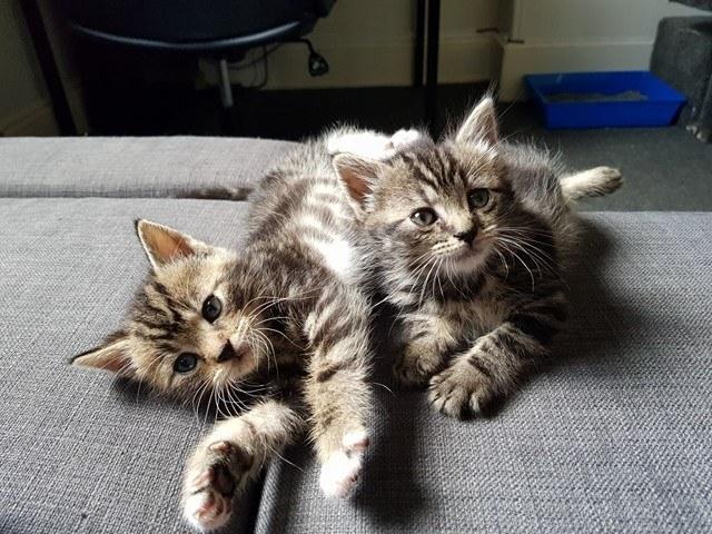 chatons calins