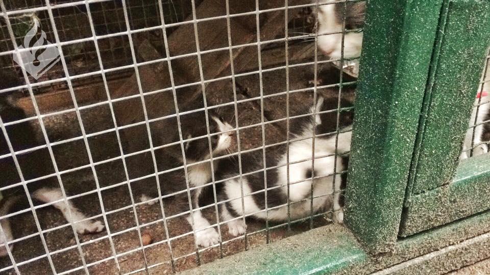 chatons dans des cages