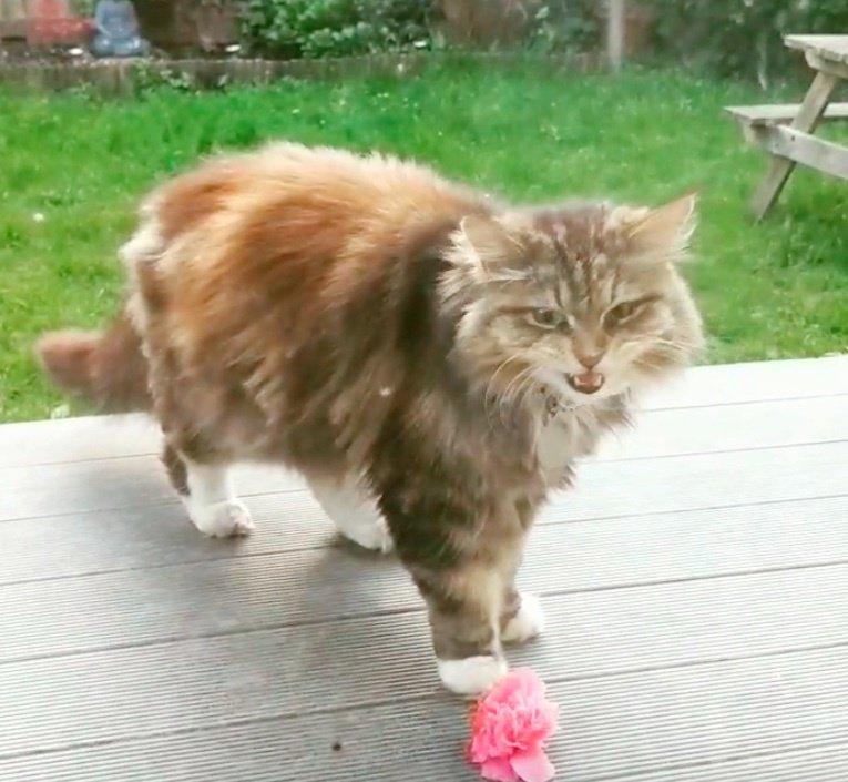 chat fleur rose