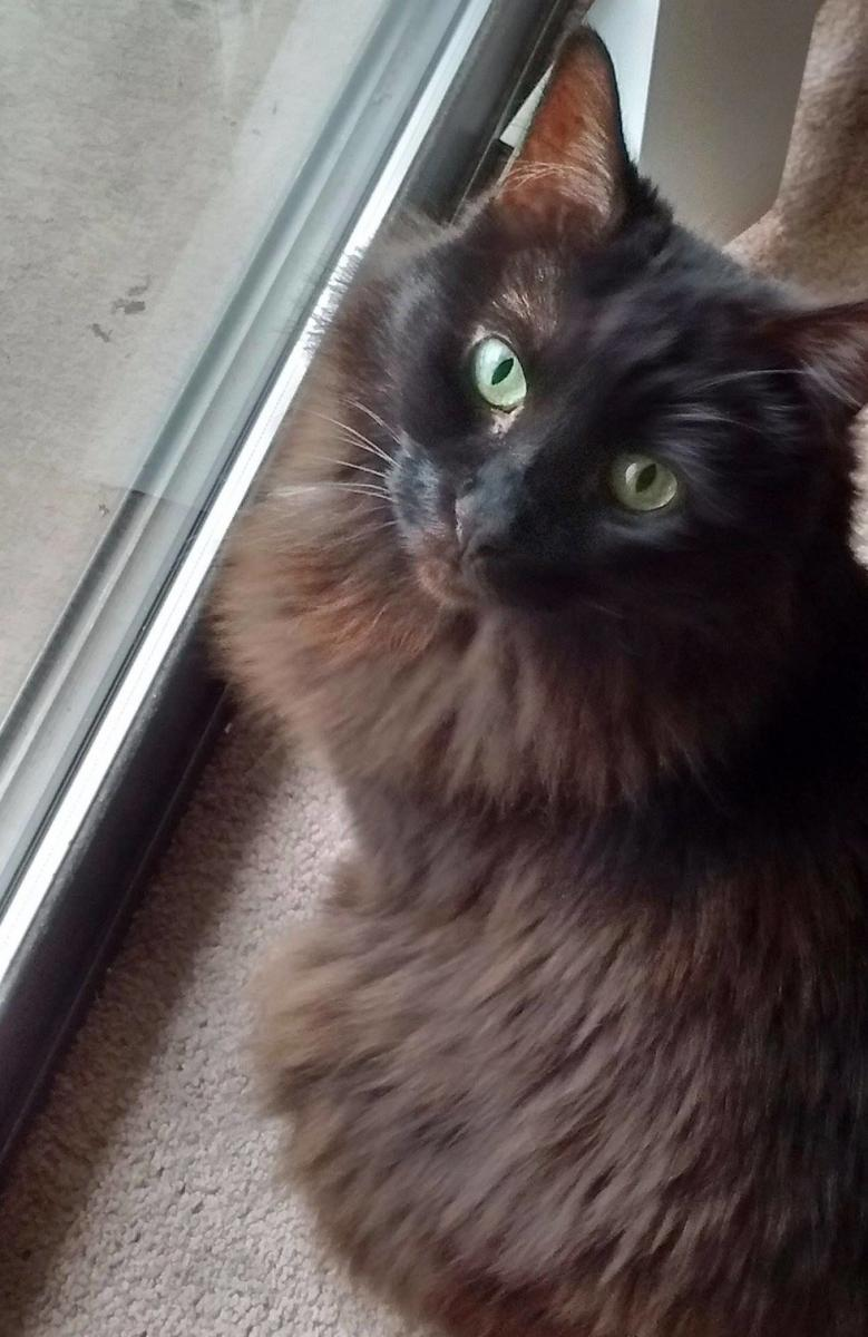 chatte noire refuge