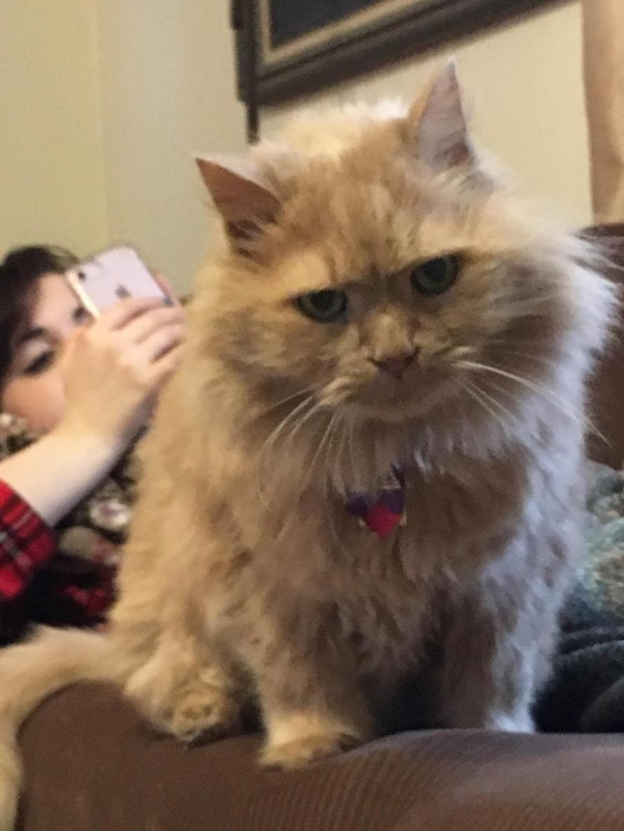 chester vieux chat adopté