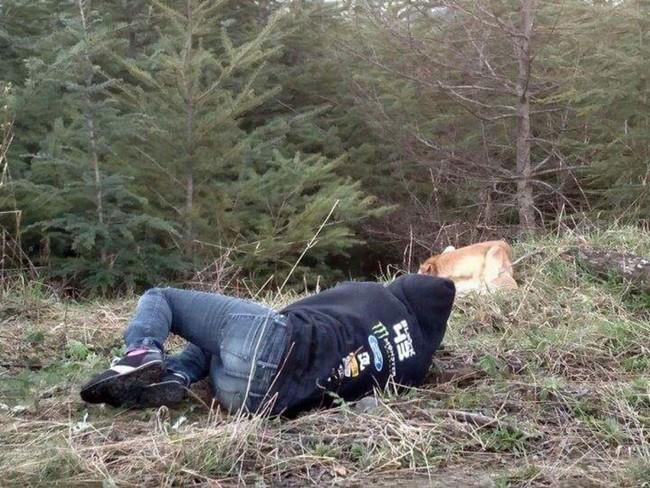 chien allongé