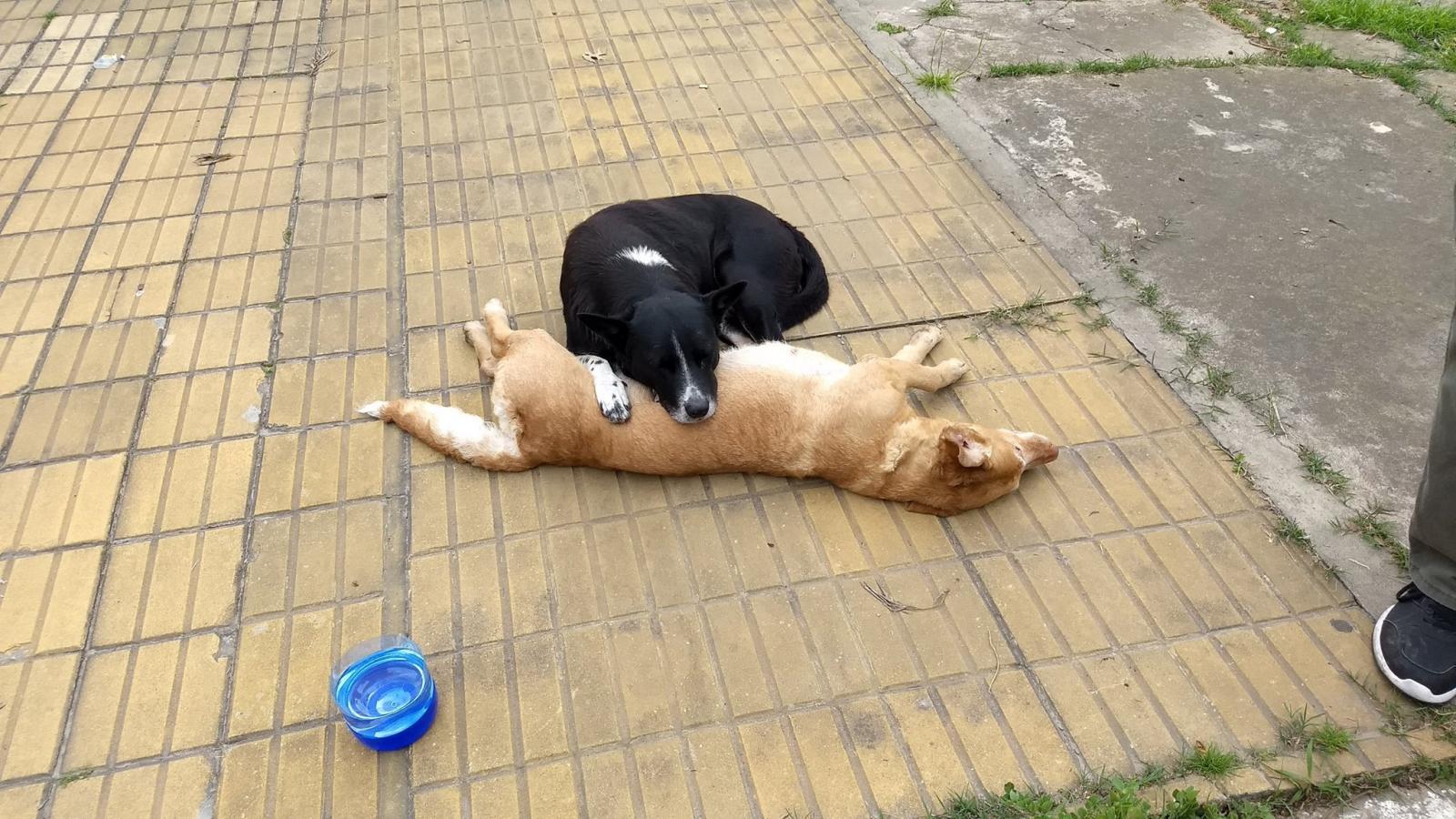 chien mort route copain
