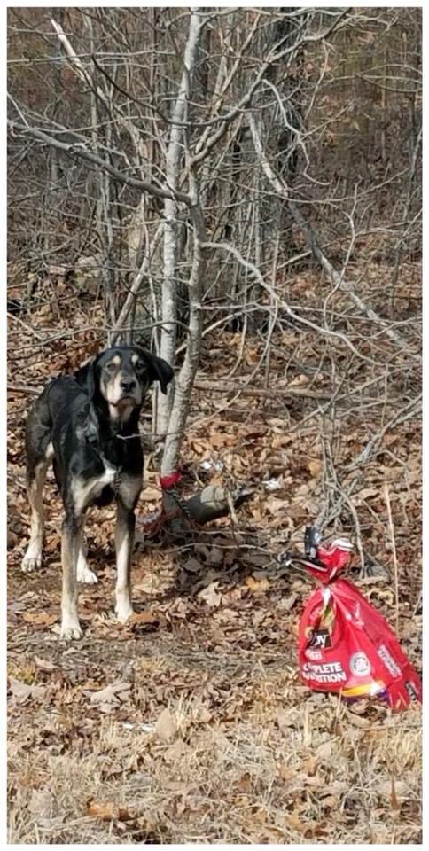 chien arbre ataché