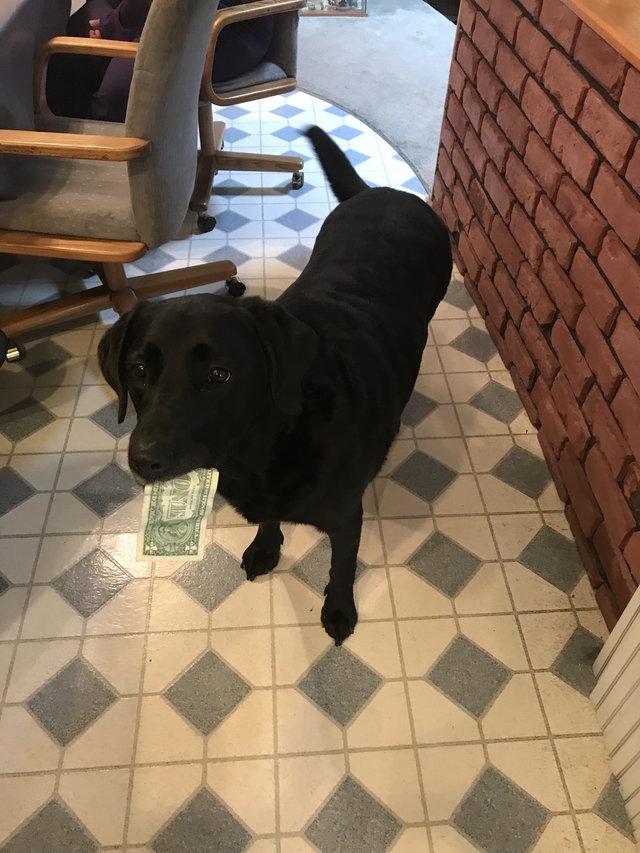 chien argent billet