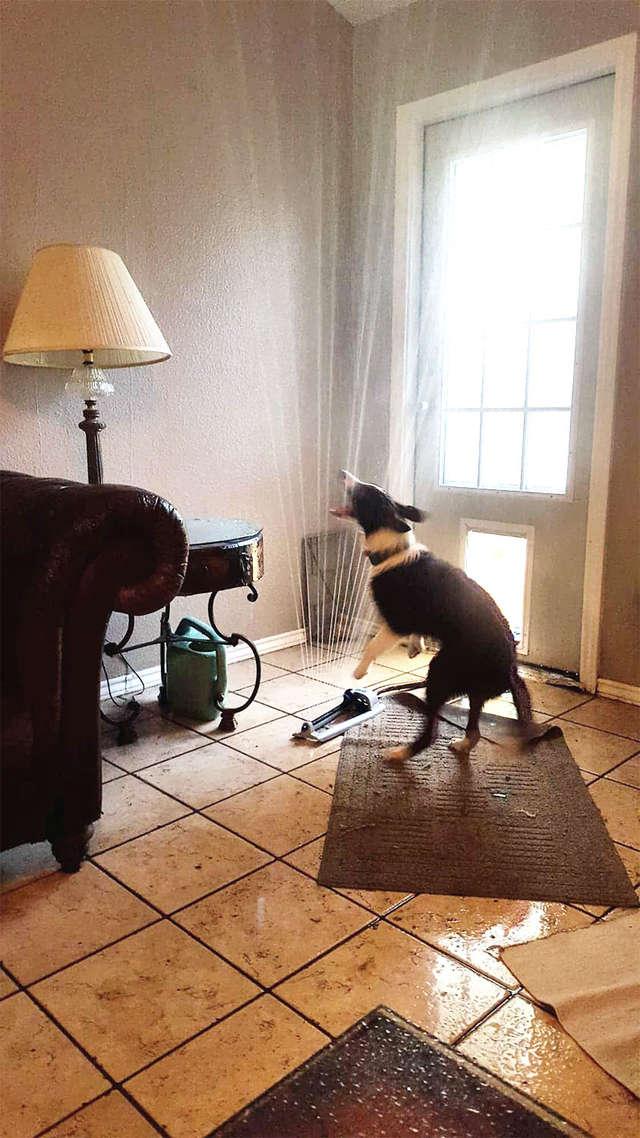 chien arroseur