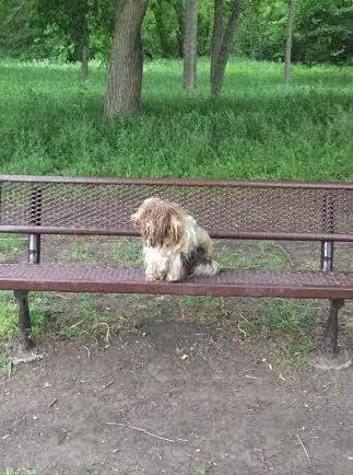 chien banc