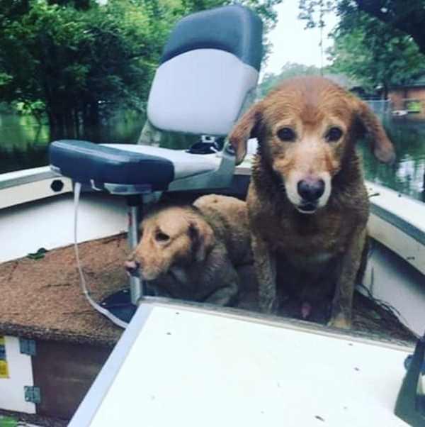 chien dans un bateau