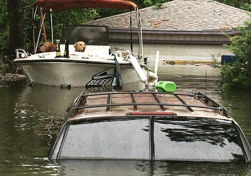 chien bateau harvey