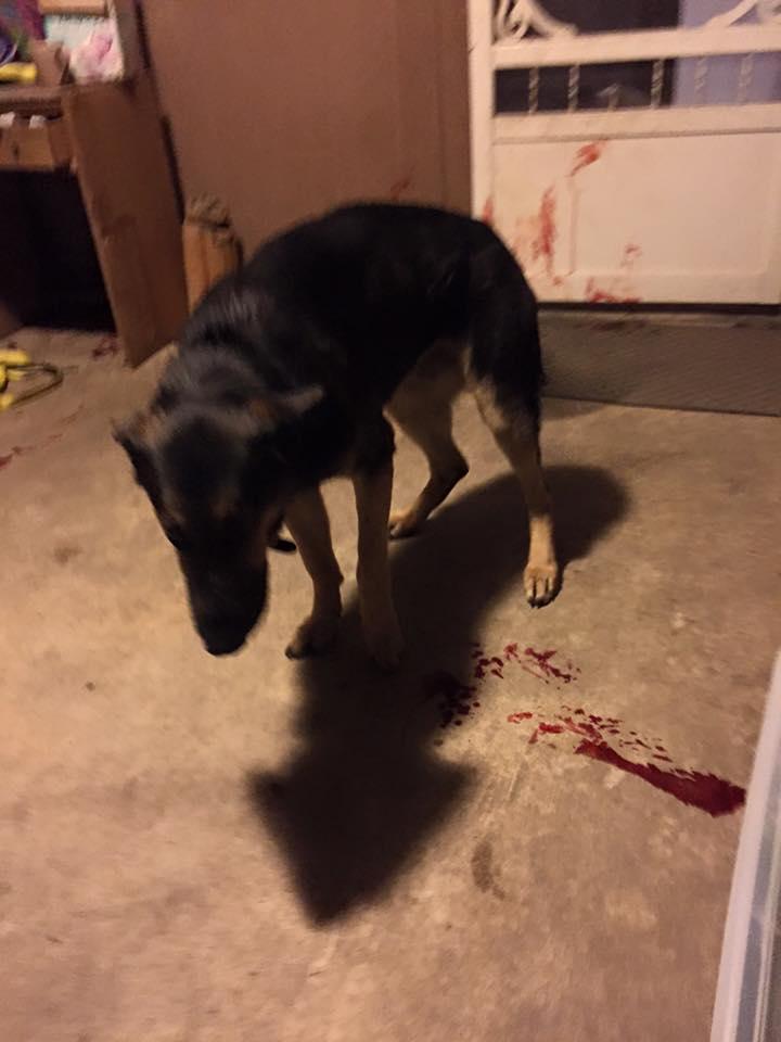 chien sang