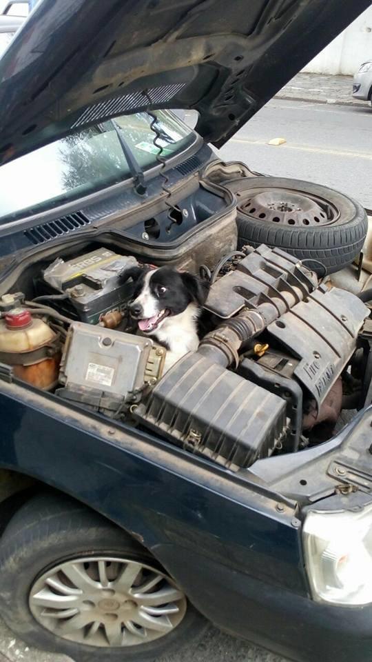 chien voiture moteur