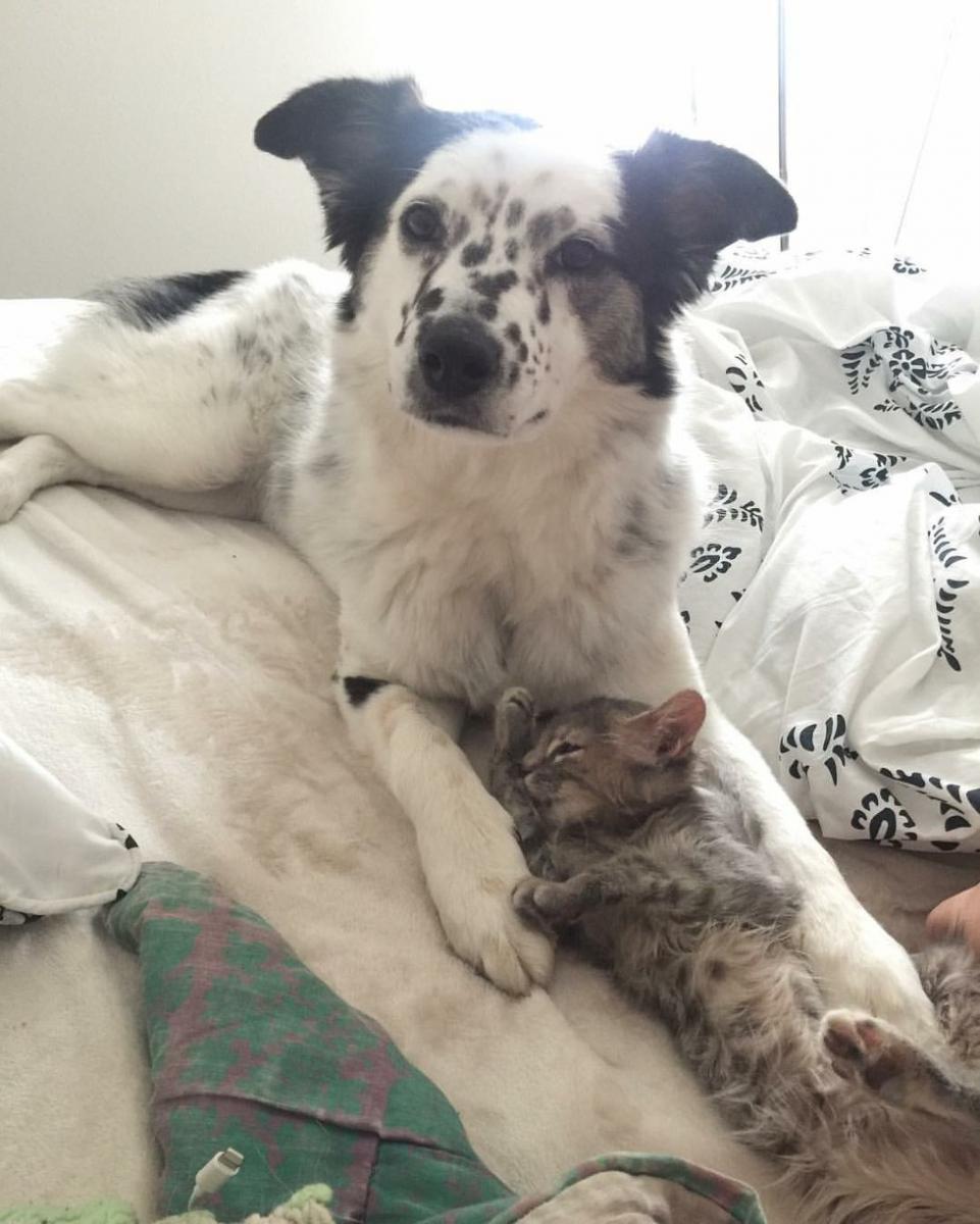chien chat amitié