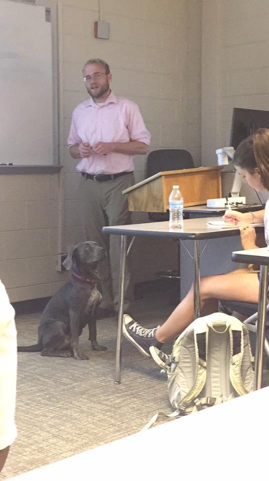 chien en cours école