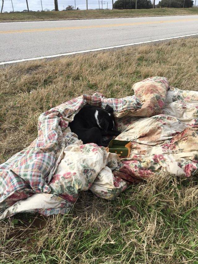 chien abandonné couverture