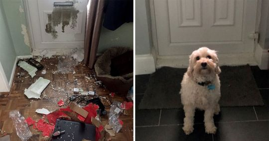 chien dégâts maison