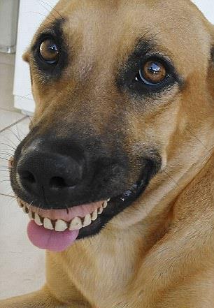 chien dentier
