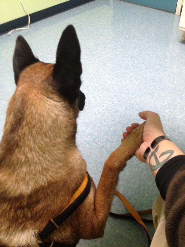 chien patte main