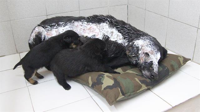 elle jette de l huile bouillante sur un chien ce qui se passe ensuite est bouleversant. Black Bedroom Furniture Sets. Home Design Ideas