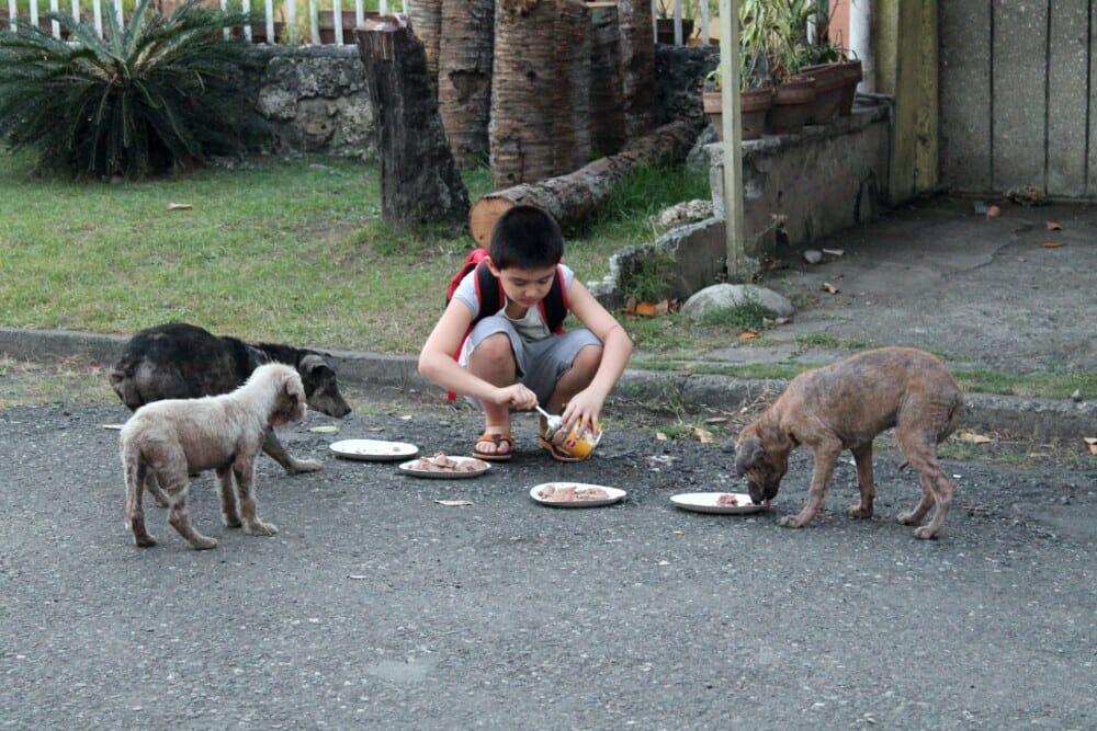 chien enfant rues