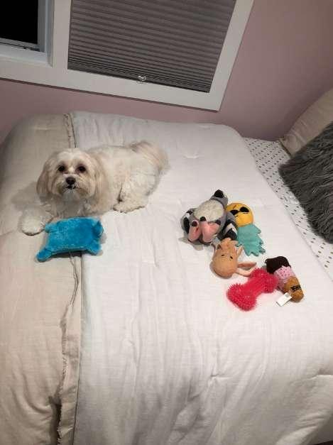 chien jouets lit