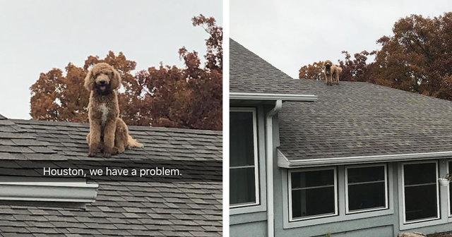 chien toit maison caniche