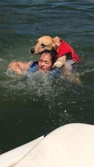 chien mer gilet