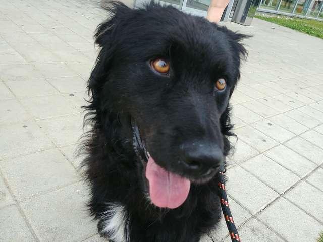 chien noir heureux