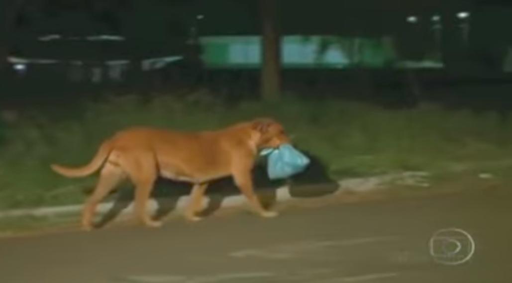 chien nourriture nuit