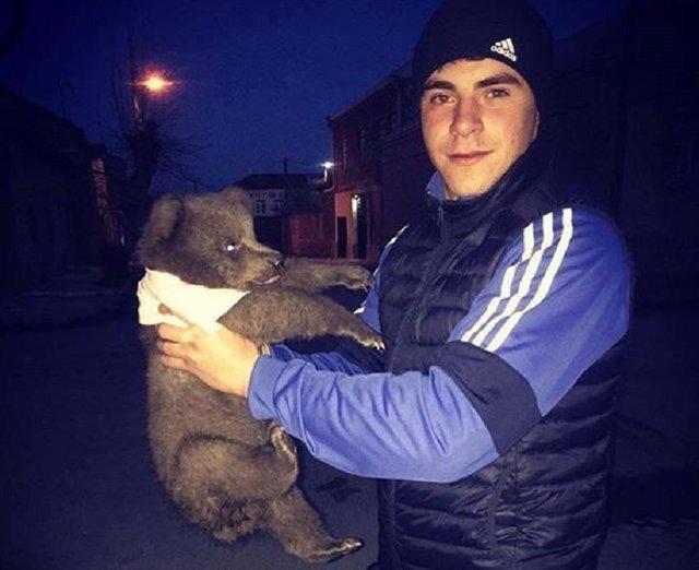 chien ours laisse
