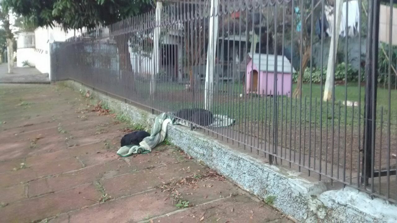 chiens partagent couverture