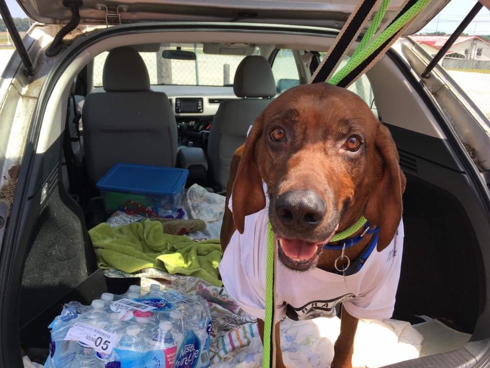 chien perdu voiture