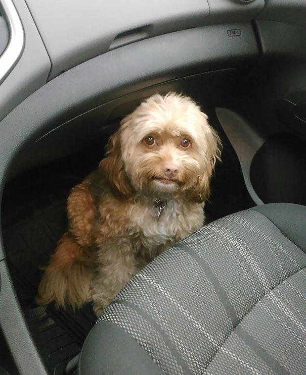 chien très peur regard
