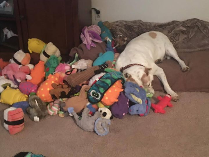chien dort peluches