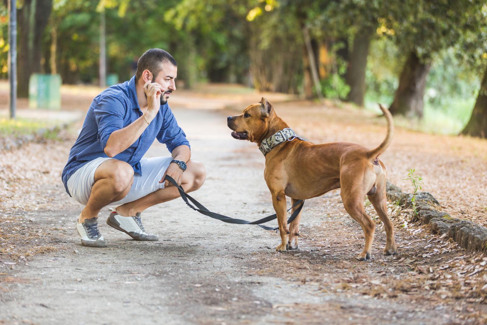 chien laisse parc